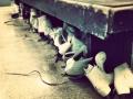 skates-1