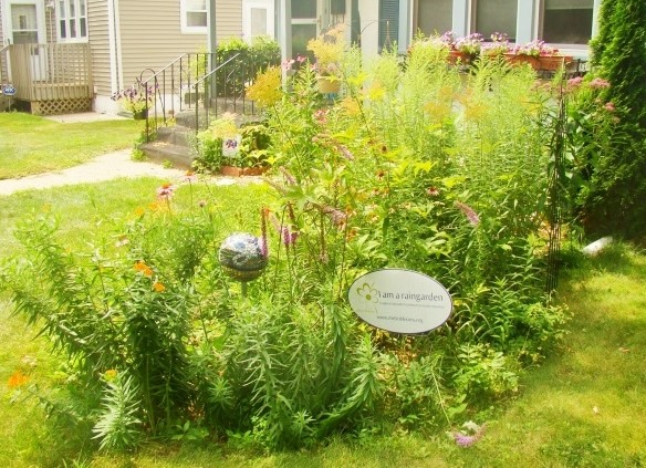 Photo of a rain garden in the front yard of home